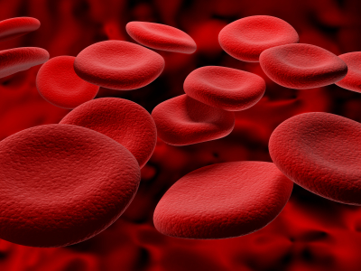 image of red blood platelets